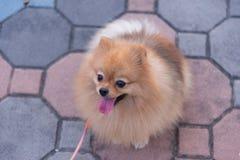 Το σκυλί απολαμβάνει το χρόνο του υπαίθριο στον κήπο Παιχνίδι σε έναν ανοιχτό χώρο Στοκ εικόνα με δικαίωμα ελεύθερης χρήσης