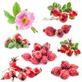 Το σκυλί αυξήθηκε (canina της Rosa) λουλούδια και φρούτα Στοκ εικόνες με δικαίωμα ελεύθερης χρήσης