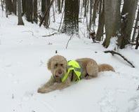 Το σκυλί βάζει στα χιονώδη ξύλα, φορά τη φανέλλα κυνηγιού Στοκ Φωτογραφίες