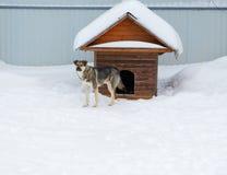 Το σκυλί βγαίνει από το θάλαμο μεταξύ snowdrifts Στοκ εικόνες με δικαίωμα ελεύθερης χρήσης