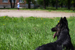 Το σκυλί βρίσκεται και κοιτάζει σε ένα παιδί Στοκ Φωτογραφία