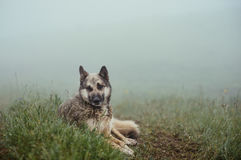 Το σκυλί βρίσκεται στο έδαφος στην ομίχλη Στοκ Εικόνα