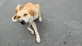 Το σκυλί γρατσουνίζει στο υπόβαθρο τσιμέντου Στοκ εικόνες με δικαίωμα ελεύθερης χρήσης