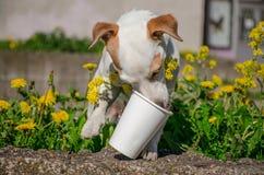 Το σκυλί γλείφει το γυαλί Στοκ Φωτογραφίες
