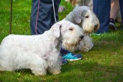 Το σκυλί εμφανίζει Στοκ φωτογραφία με δικαίωμα ελεύθερης χρήσης