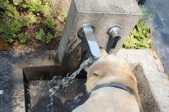 το σκυλί διψασμένος Στοκ εικόνες με δικαίωμα ελεύθερης χρήσης