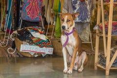 Το σκυλί κάθεται στην αγορά στην Ινδία, ο Βορράς Goa, Arambol Στοκ Εικόνες