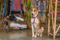 Το σκυλί κάθεται στην αγορά στην Ινδία, ο Βορράς Goa, Arambol Στοκ εικόνα με δικαίωμα ελεύθερης χρήσης