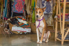Το σκυλί κάθεται στην αγορά στην Ινδία, ο Βορράς Goa, Arambol Στοκ Φωτογραφίες