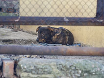 Το σκυλί καθορίζει στο έδαφος και αναμονή κάποιο στοκ φωτογραφία με δικαίωμα ελεύθερης χρήσης