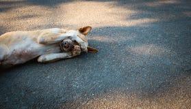 Το σκυλί κοιμάται στο υπόβαθρο τσιμέντου, το σκυλί είναι ντροπαλό Στοκ Εικόνες