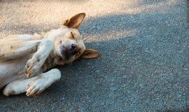 Το σκυλί κοιμάται στο υπόβαθρο τσιμέντου, το σκυλί κοιμάται επάνω Στοκ Εικόνα