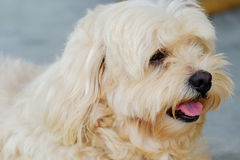 Το σκυλί κοιτάζει Στοκ φωτογραφίες με δικαίωμα ελεύθερης χρήσης