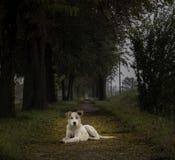 Το σκυλί κρατά τις συντηρήσεις η μετάβαση Στοκ Εικόνες