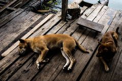 Το σκυλί μου Στοκ φωτογραφία με δικαίωμα ελεύθερης χρήσης