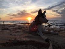 Το σκυλί μου Στοκ Εικόνες