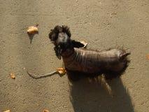 Το σκυλί μου Στοκ Εικόνα