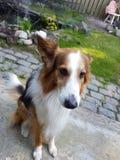 Το σκυλί μου 2 στοκ εικόνες