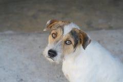 Το σκυλί μου Στοκ Φωτογραφίες