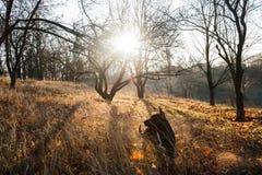 Το σκυλί λούζεται στην ηλιοφάνεια Στοκ Εικόνα