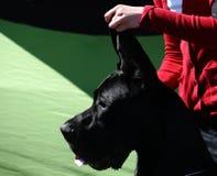 Το σκυλί παρουσιάζει Στοκ Φωτογραφίες