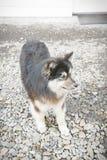 Το σκυλί περπατά κατά μήκος της ακτής στοκ εικόνα με δικαίωμα ελεύθερης χρήσης