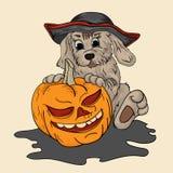 Το σκυλί σε ένα καπέλο πειρατών κρατά μια κολοκύθα για αποκριές Στοκ φωτογραφία με δικαίωμα ελεύθερης χρήσης