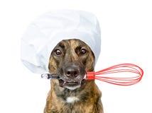 Το σκυλί στο καπέλο του αρχιμάγειρα που κρατά ένα καλώδιο χτυπά ελαφρά στο στόμα απομονωμένος στοκ φωτογραφίες
