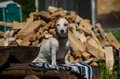 Το σκυλί στο χωριό Στοκ Εικόνες