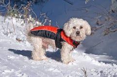 Το σκυλί το χειμώνα στο χιόνι Στοκ εικόνα με δικαίωμα ελεύθερης χρήσης