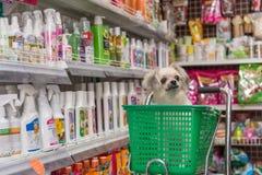 Το σκυλί τόσο χαριτωμένο περιμένει έναν ιδιοκτήτη κατοικίδιων ζώων στο κατάστημα κατοικίδιων ζώων Στοκ εικόνες με δικαίωμα ελεύθερης χρήσης