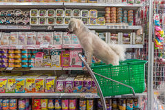 Το σκυλί τόσο χαριτωμένο περιμένει έναν ιδιοκτήτη κατοικίδιων ζώων στο κατάστημα κατοικίδιων ζώων Στοκ Εικόνα