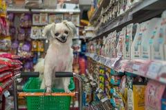 Το σκυλί τόσο χαριτωμένο περιμένει έναν ιδιοκτήτη κατοικίδιων ζώων στο κατάστημα κατοικίδιων ζώων Στοκ φωτογραφία με δικαίωμα ελεύθερης χρήσης