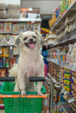 Το σκυλί τόσο χαριτωμένο περιμένει έναν ιδιοκτήτη κατοικίδιων ζώων στο κατάστημα κατοικίδιων ζώων Στοκ Φωτογραφίες