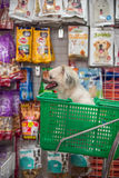 Το σκυλί τόσο χαριτωμένο περιμένει έναν ιδιοκτήτη κατοικίδιων ζώων στο κατάστημα κατοικίδιων ζώων Στοκ Φωτογραφία