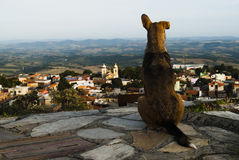 Το σκυλί φαίνεται η πόλη στη Βραζιλία Στοκ φωτογραφίες με δικαίωμα ελεύθερης χρήσης