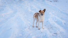 Το σκυλί φαίνεται κεκλεισμένων των θυρών Στοκ εικόνες με δικαίωμα ελεύθερης χρήσης