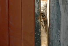 Το σκυλί φρουρεί το μάτι Στοκ εικόνα με δικαίωμα ελεύθερης χρήσης