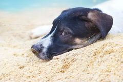Το σκυλί χαλαρώνει στο καλοκαίρι παραλιών άμμου θάλασσας Στοκ φωτογραφία με δικαίωμα ελεύθερης χρήσης