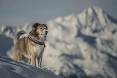 Το σκυλί χτυπά θέτει Στοκ Εικόνες