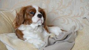 Το σκυλί ύπνου ξυπνά φιλμ μικρού μήκους
