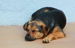 Το σκυλί ύπνου Στοκ Εικόνες
