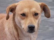 Το σκυλί - 1 Στοκ φωτογραφία με δικαίωμα ελεύθερης χρήσης
