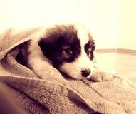 Το σκυλί, Betty Στοκ εικόνα με δικαίωμα ελεύθερης χρήσης