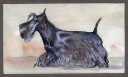 Το σκωτσέζικο τεριέ χρωμάτισε στο watercolor στο σχεδιάγραμμα στοκ φωτογραφία