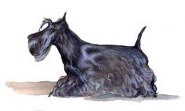 Το σκωτσέζικο τεριέ χρωμάτισε στο watercolor στο σχεδιάγραμμα στοκ εικόνες