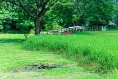 Το σπίτι περιβάλλεται από τις εγκαταστάσεις και τα δέντρα Άποψη σχετικά με την καμπίνα διακοπών από μια λίμνη Μικροσκοπικό σπίτι  στοκ εικόνα