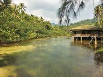 Το σπίτι στον ποταμό στη ζούγκλα πράσινοι φοίνικες Koh νησί Kood, Ταϊλάνδη στοκ φωτογραφία με δικαίωμα ελεύθερης χρήσης