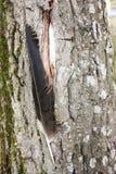 Το σπίτι των πουλιών Το φτερό πουλιών ` s Στοκ εικόνα με δικαίωμα ελεύθερης χρήσης