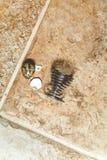 Το σπασμένο αυγό ορτυκιών και το ελικοειδές ράφι βρίσκονται στο πάτωμα Στοκ φωτογραφία με δικαίωμα ελεύθερης χρήσης